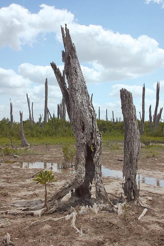 Uno scorcio della foresta pietrifi cata all'interno dell'area naturalistica di Celestun