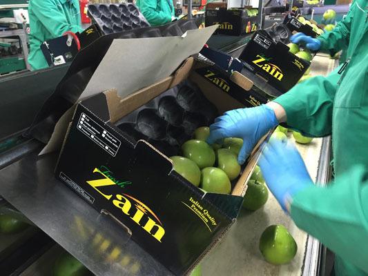 Confezionamento delle mele prima della spedizione