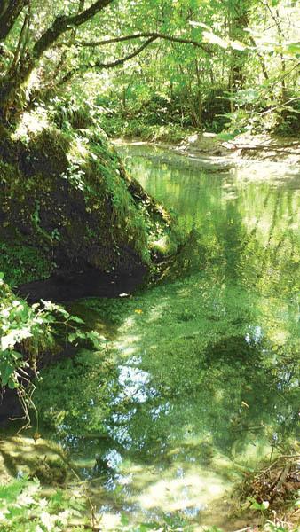 Le acque limpide del torrente Malazza vicino Chiaulis