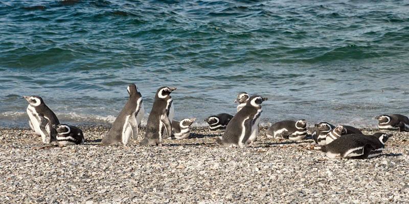 La Pinguinera dell'isola Martillo