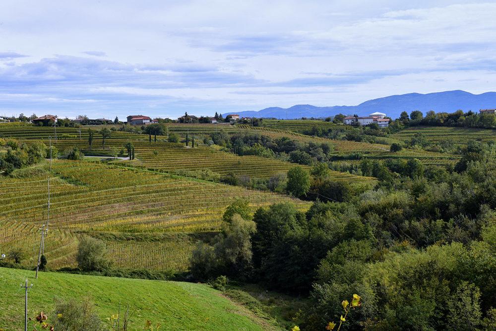 Suggestivo panorama del Collio a Oslavia
