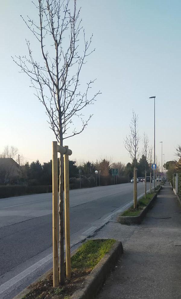 Ronchi, nuove alberature in via Redipuglia
