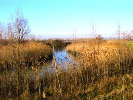 Il Muart di Carot, ramo morto del fiume Ausa