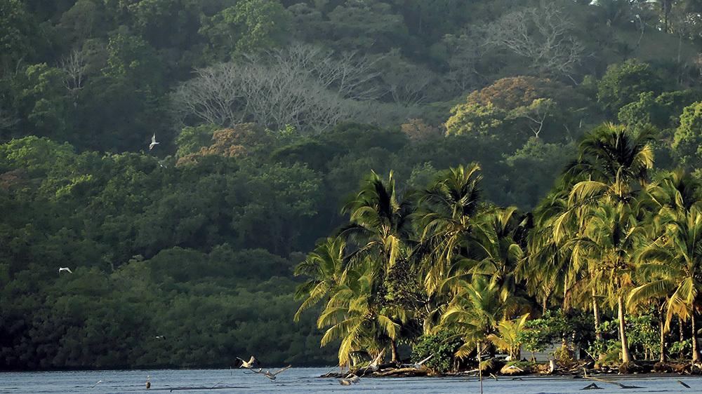 La giungla panamense