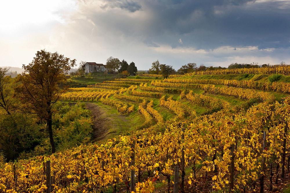 Vigne del Collio in autunno (ph. PromoTurismoFVG)