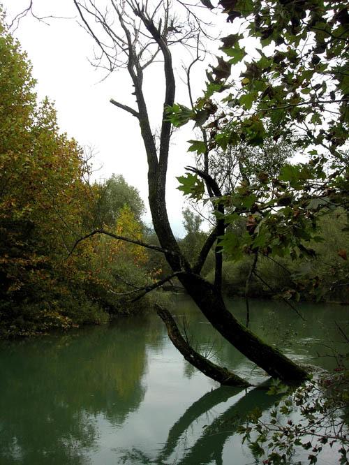 L'ambiente naturale caratteristico dell'area umida delle sorgenti del fiume Livenza