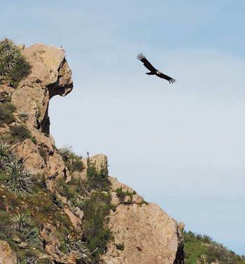 La Cruz del Condor con lo spettacolo offerto dai grandi volatili (ph. C. Pizzin)